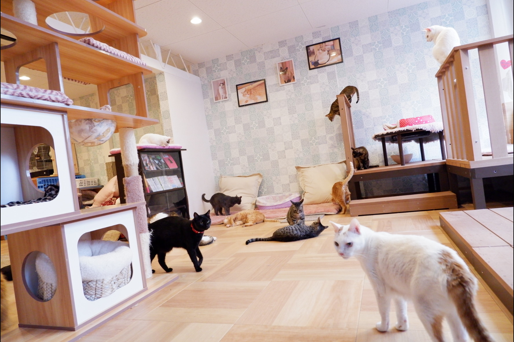 保護猫カフェ猫の恵庭