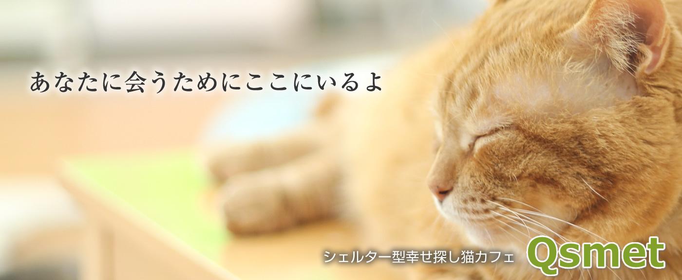 シェルター型幸せ探し猫カフェQsmet - くすめっと