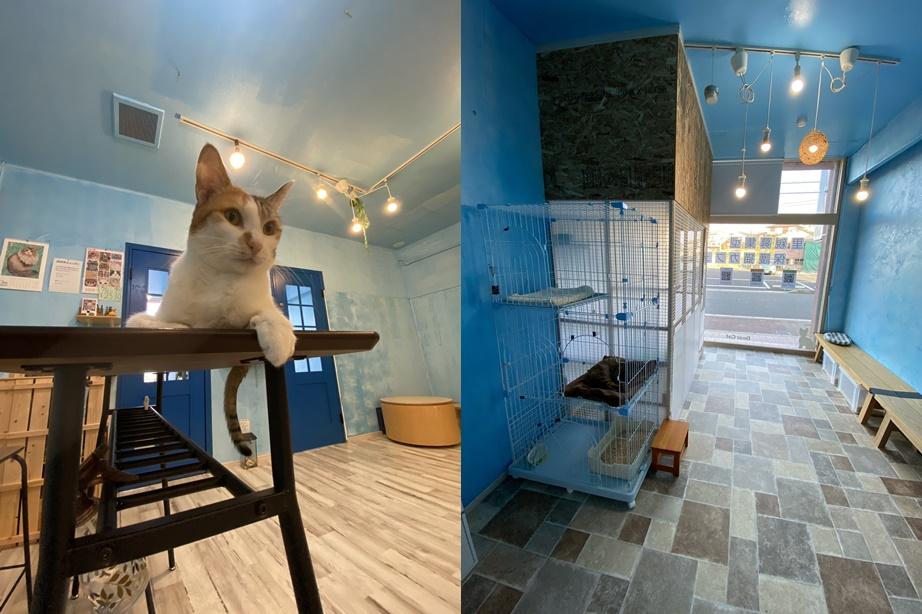 保護猫カフェDear Cat