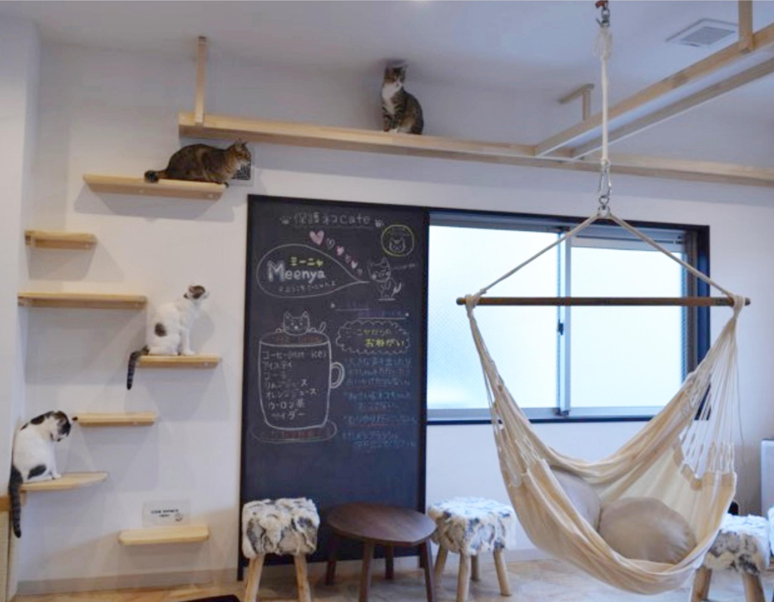 保護猫cafeMeenya