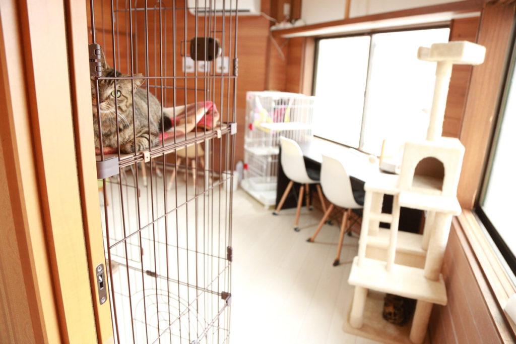 保護猫カフェ Cat Spase