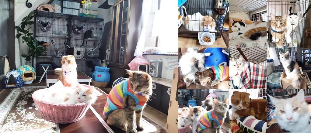 ねこcafe Salon de Kei