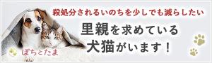 全国の犬猫ペットの里親募集マッチングサイト|ぽちとたま