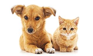 保健所収容ペットの情報