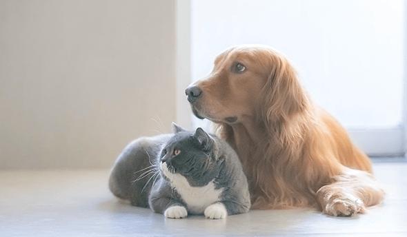 ペットの受け渡しについて