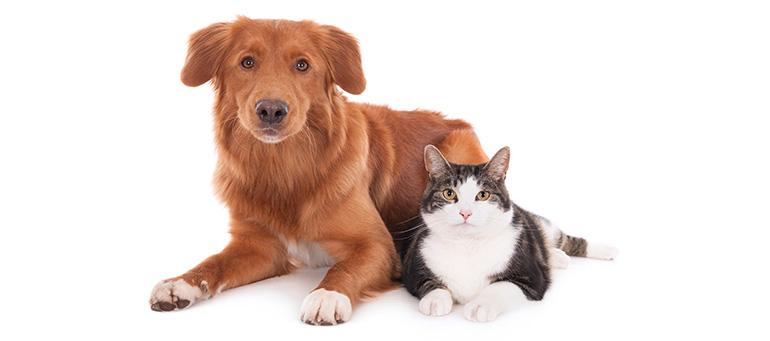 犬、猫の飼い方 飼う前に読むこと
