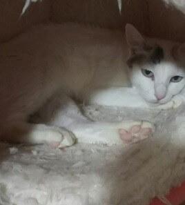 大人しい、怖がりだけど甘えたい。美人な三毛猫さん。