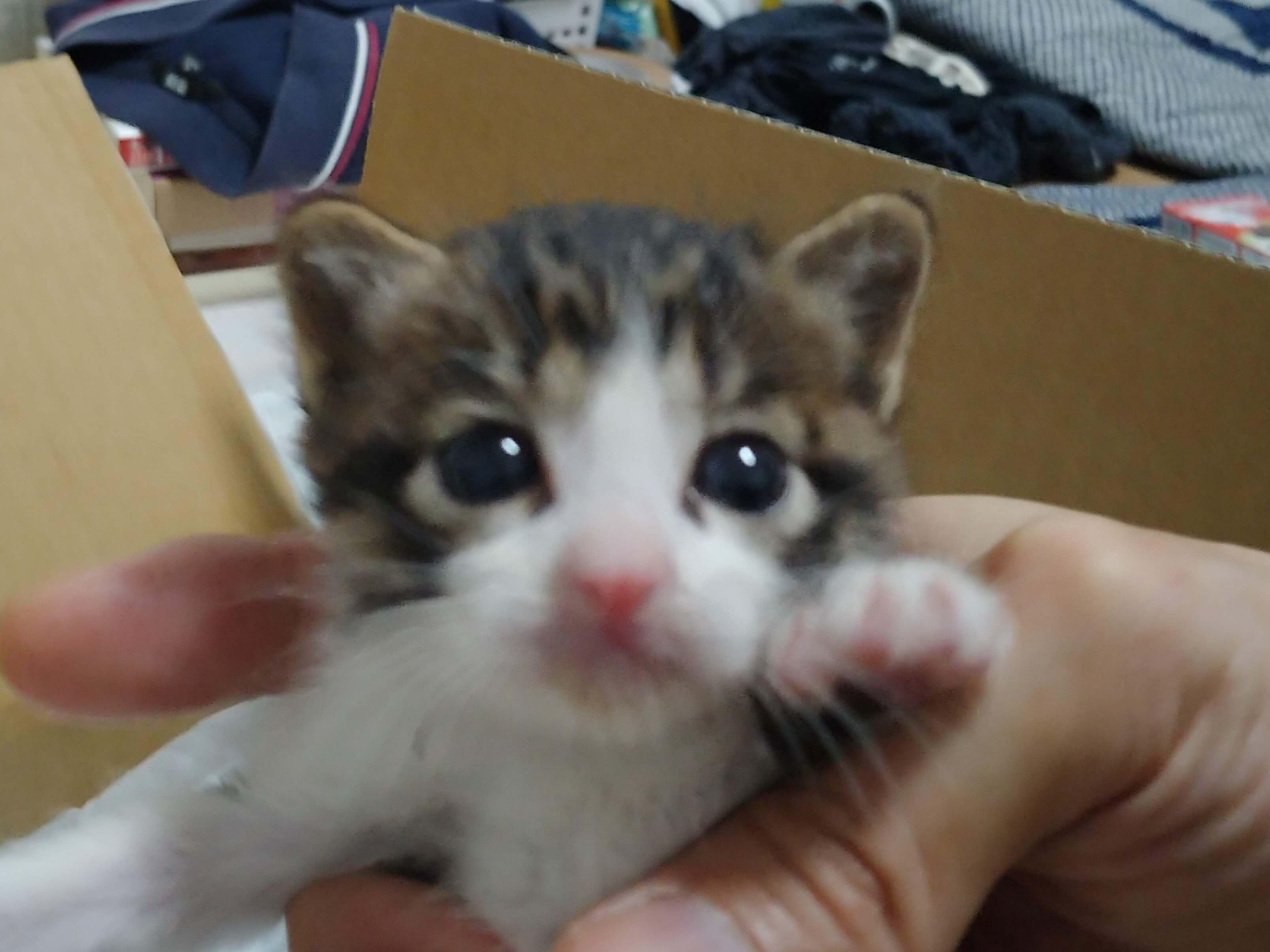 超カワイイ☆子猫ちゃん達の里親さん募集中です!