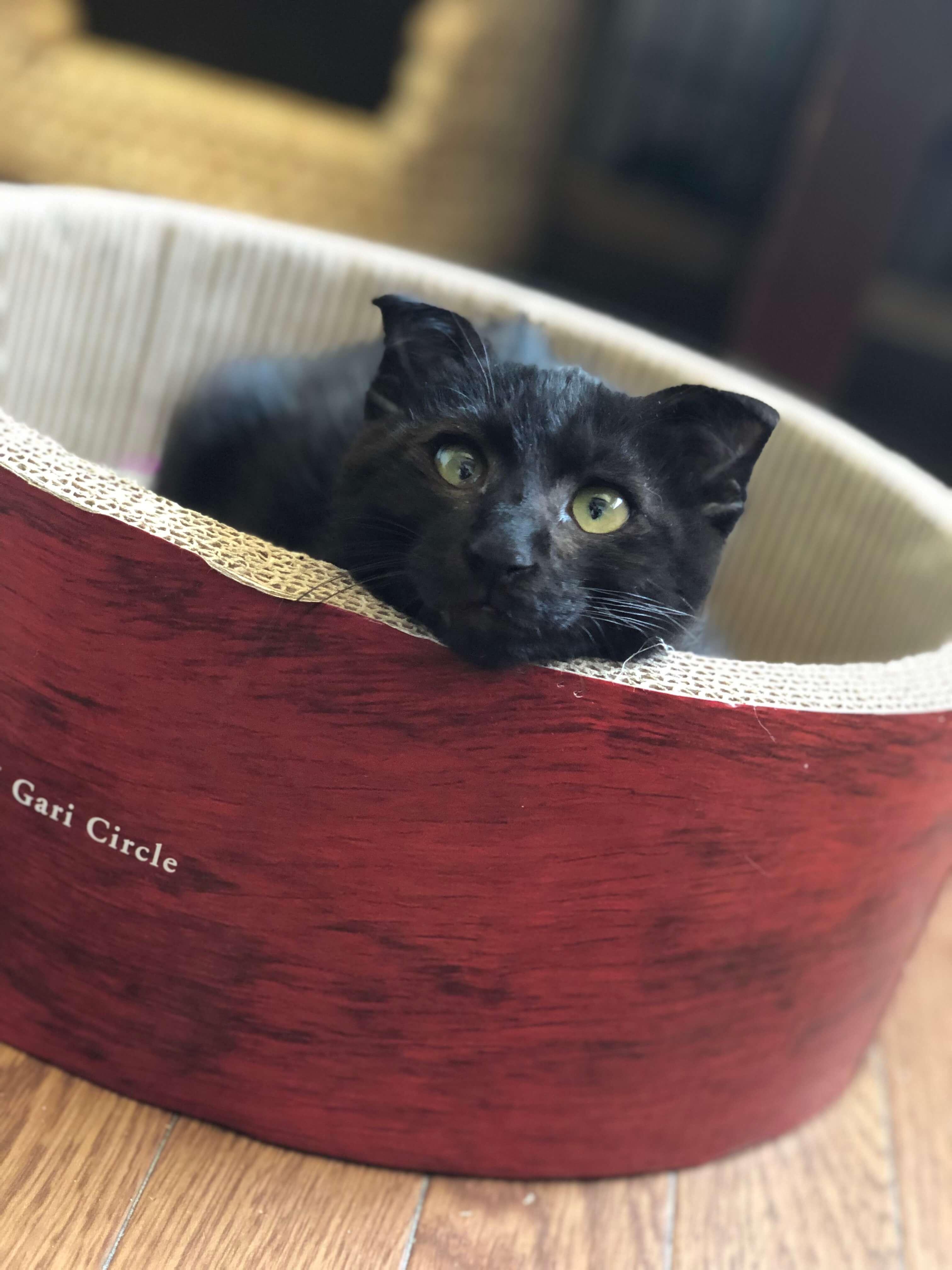 甘えんぼの黒猫さん