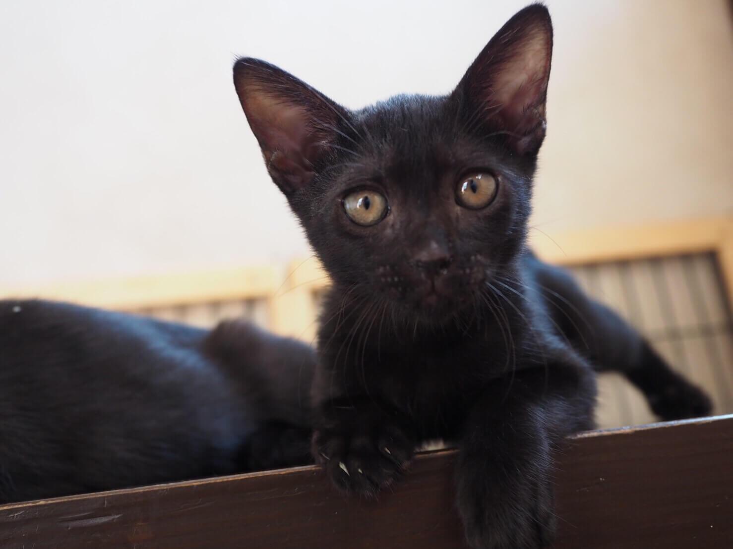 活発やんちゃっ子な黒猫さん