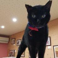懐こくて可愛い 黒猫あさかちゃん ♪