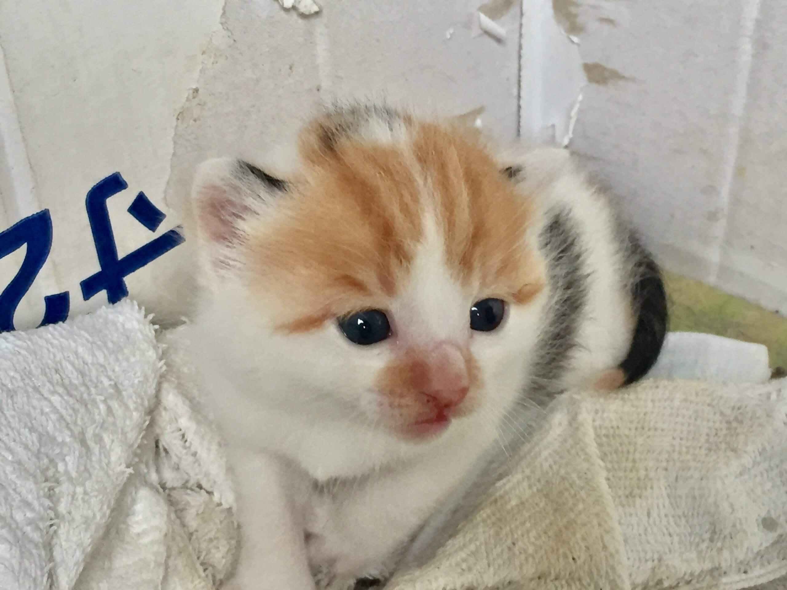 4月に生まれた子猫(女の子)