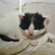 4月に生まれた子猫(男の子)