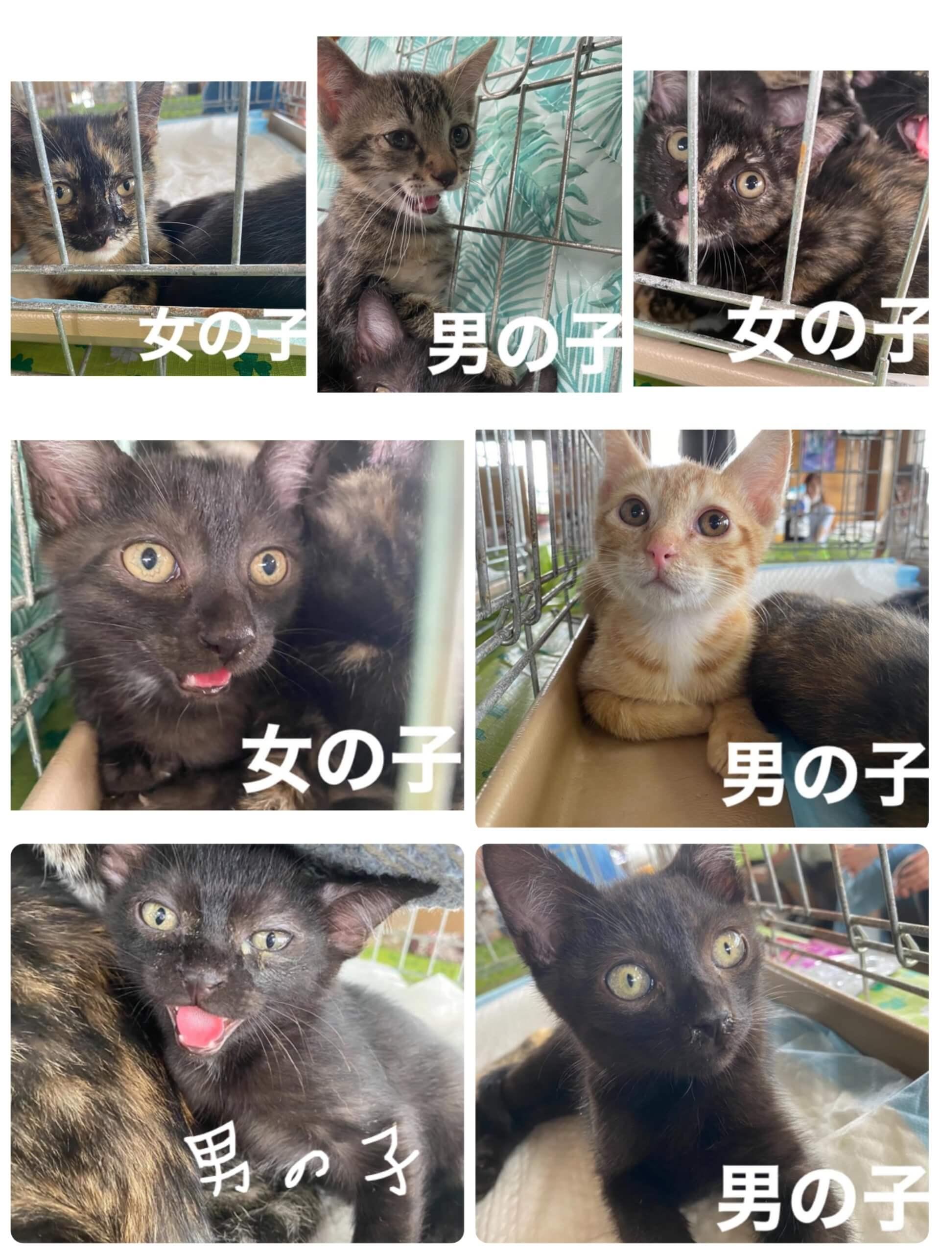緊急募集 可愛い子猫たち