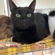 とっても美人な黒猫エネちゃん