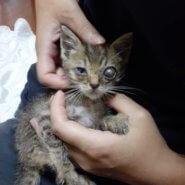 生後1ヶ月の子猫(女の子)