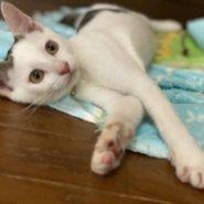 可愛い子猫ちゃん💓