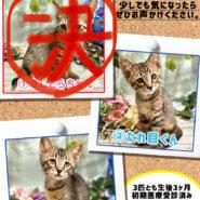 【生後3ヶ月前後の子猫2兄弟】