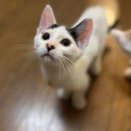 可愛い子猫ちゃん💞