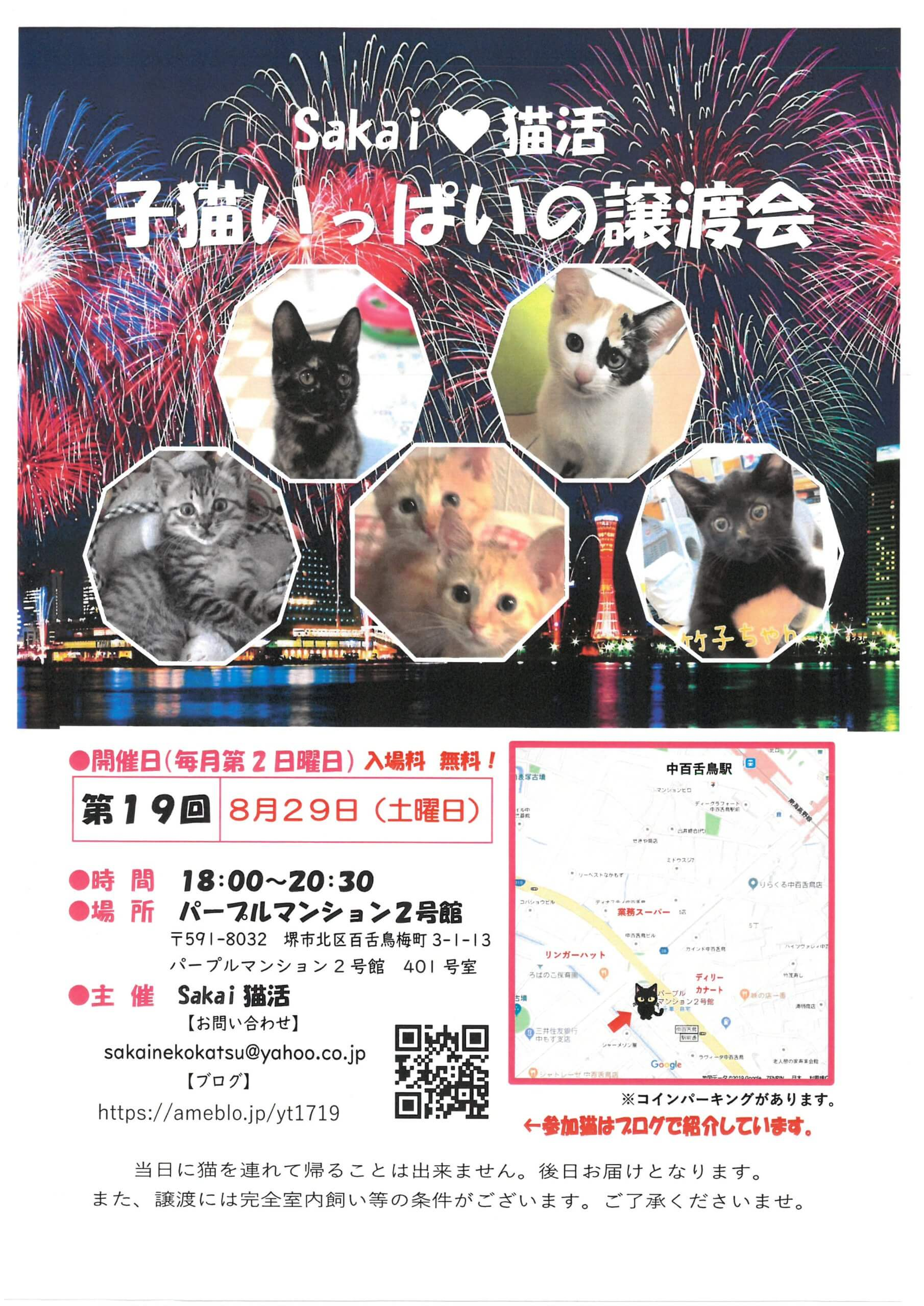 sakai猫活 子猫いっぱいの譲渡会