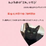 4歳の黒猫