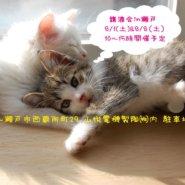 猫の譲渡会IN瀬戸~ちーむにゃいんず 8月8日