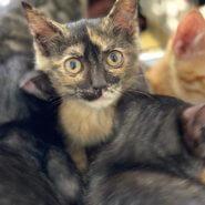 綺麗なサビ猫