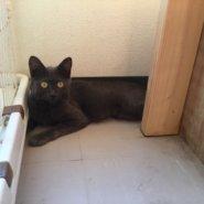 【保護猫】ロビン♀推定6ヶ月