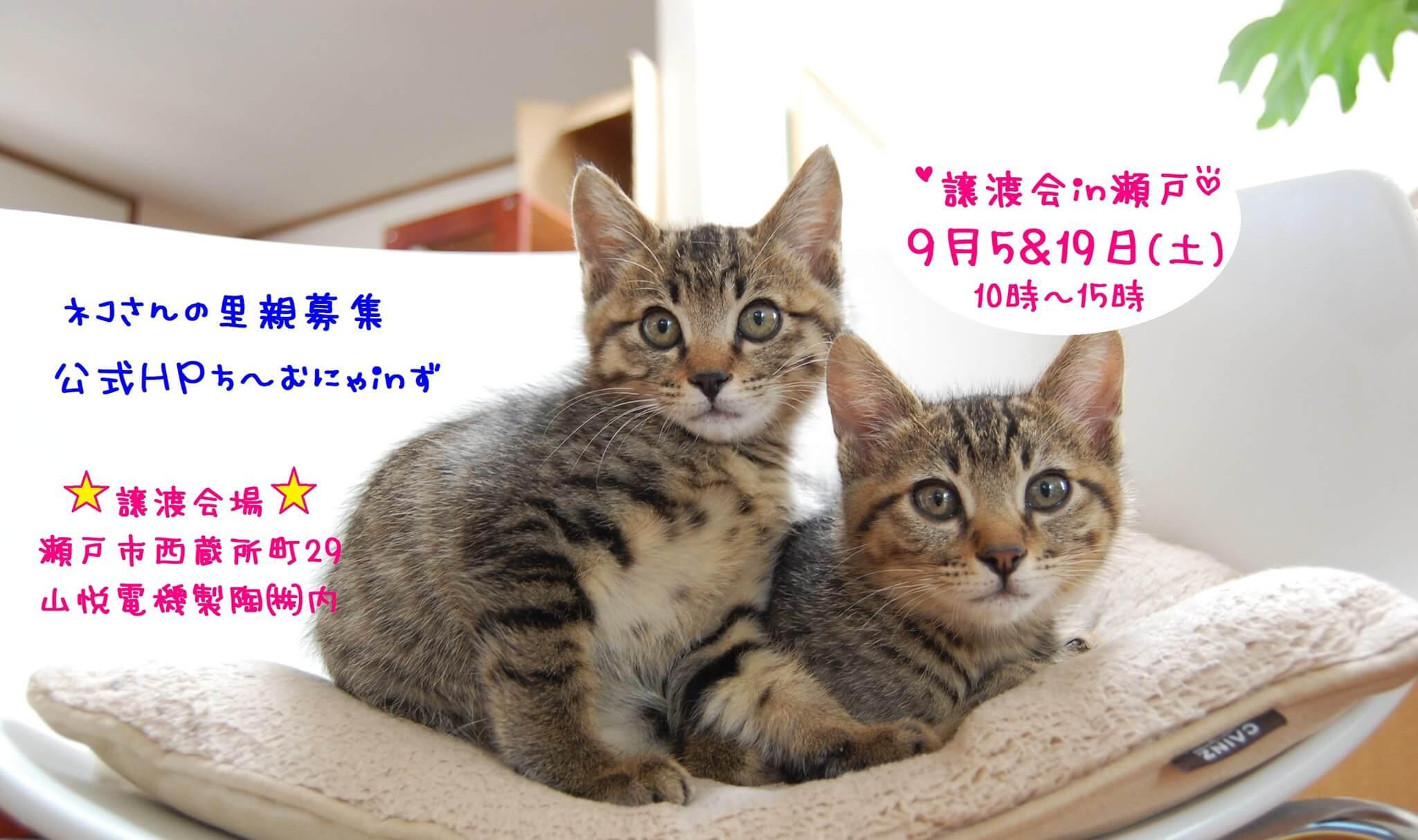 猫の譲渡会 IN 瀬戸 ~ ちーむにゃいんず 2020年9月05日&19日開催