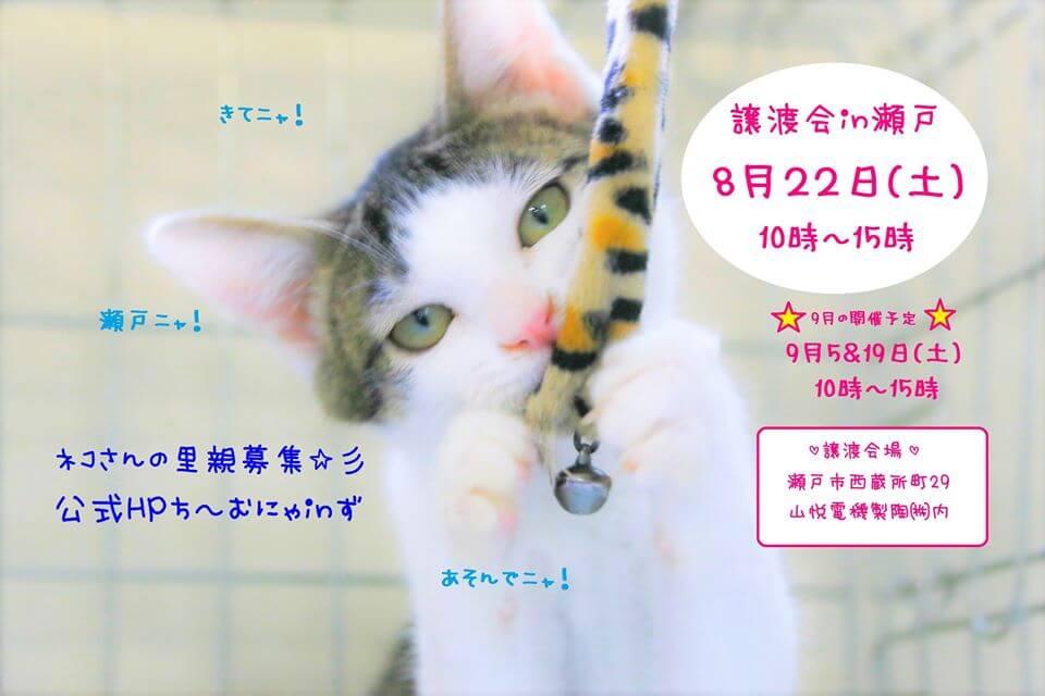 猫の譲渡会IN瀬戸~ちーむにゃいんず 8月22日