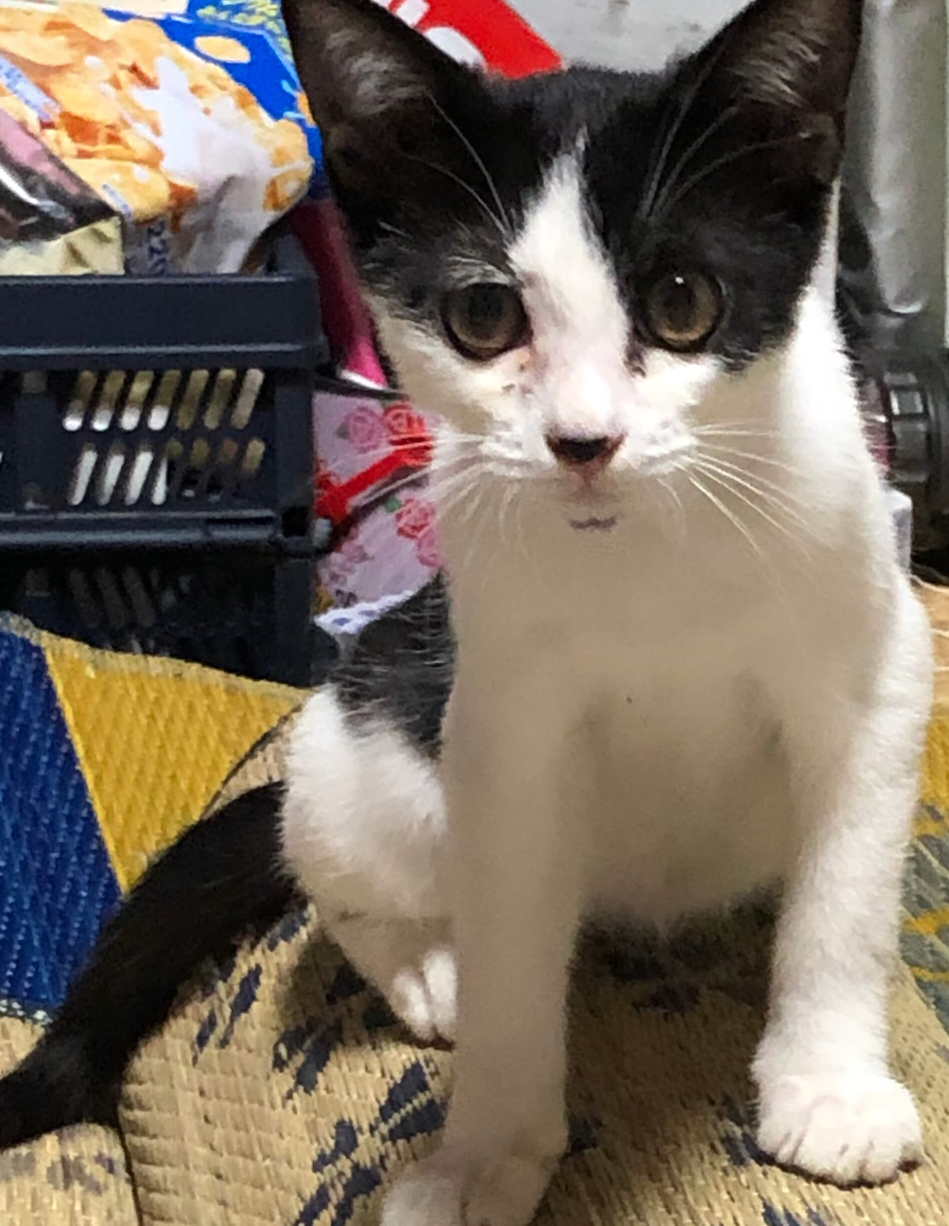 生後3か月位のオス猫