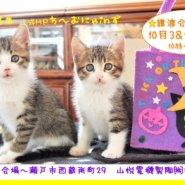 猫の譲渡会 IN 瀬戸 ~ ちーむにゃいんず 2020年10月3日&17日開催
