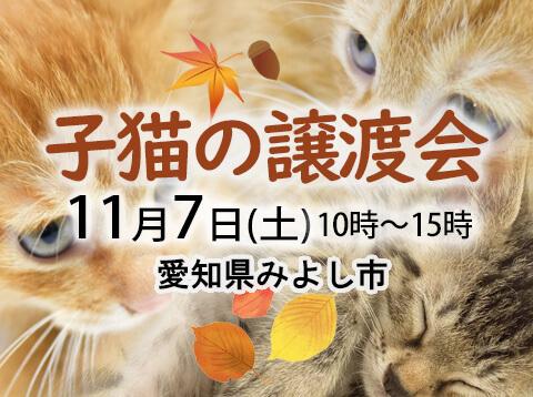 子猫がいる譲渡会-愛知県みよし市-