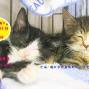 猫の譲渡会 IN 瀬戸 ~ ちーむにゃいんず 2020年11月7日&21日開催