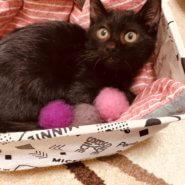 ☆ 黒猫銀ちゃん、ご縁待ってます ☆
