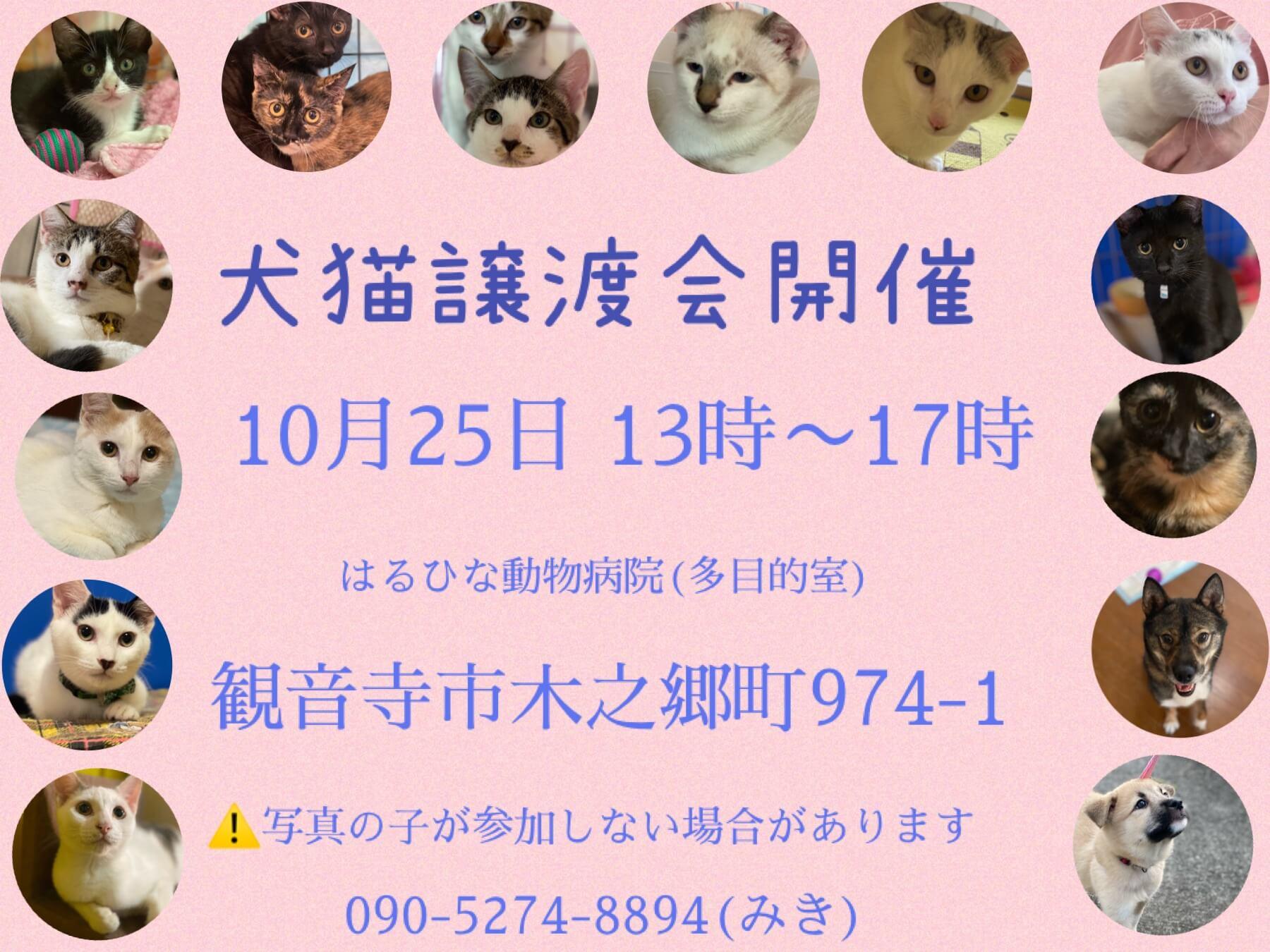 香川 犬猫譲渡会開催!