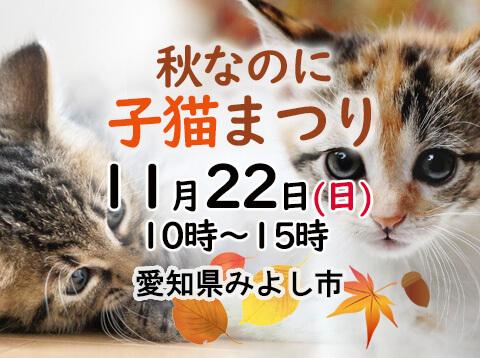 秋なのに子猫まつり-愛知県みよし市