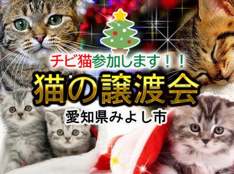 チビ猫参加します!!-愛知県みよし市