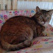 【保護猫】よもぎ推定7歳♀キジサビ