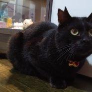 【保護猫】くう♂推定1歳黒猫
