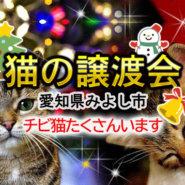まだまだチビ猫います!!-愛知県みよし市