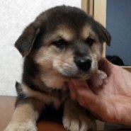 急募 可愛い保護犬「リードくん」