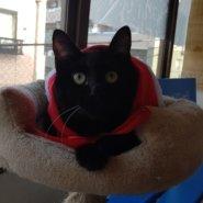 【保護猫】もすけ♂推定7ヶ月黒猫
