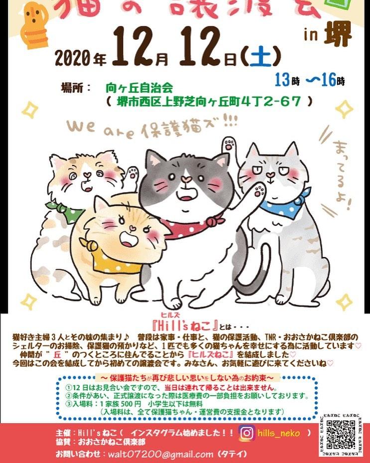 猫の譲渡会 堺上野芝