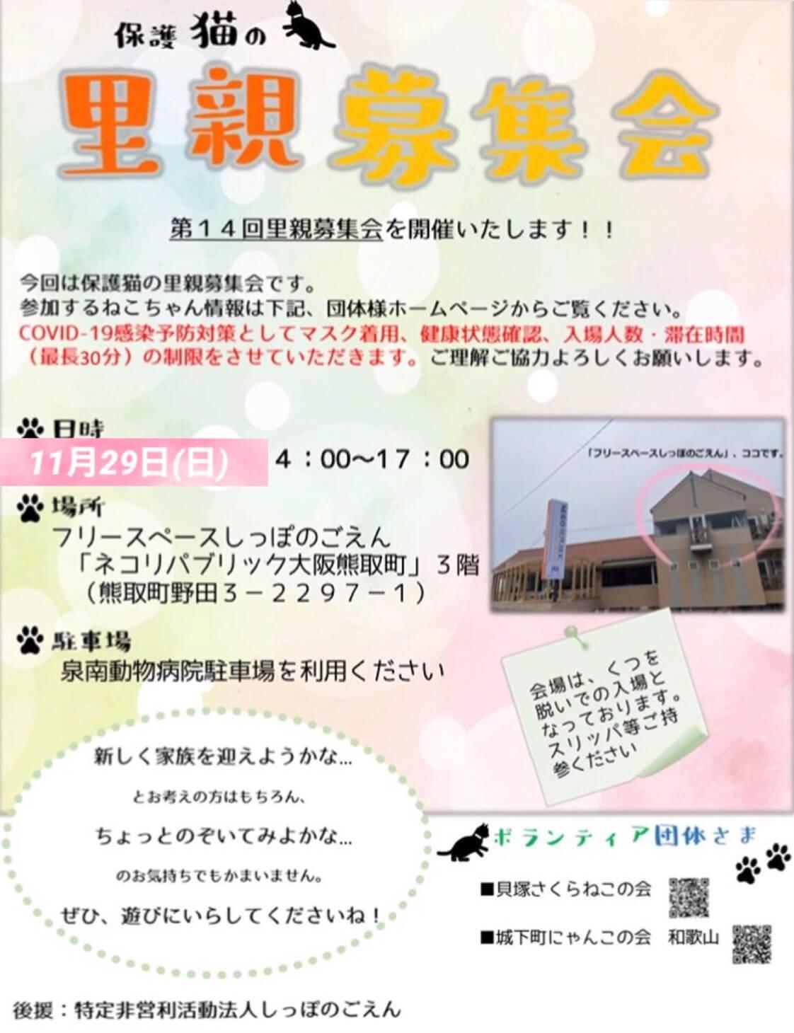 保護猫の里親募集会in大阪府泉南郡熊取町
