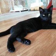 【保護猫】黒猫ピッピ♀6ヶ月