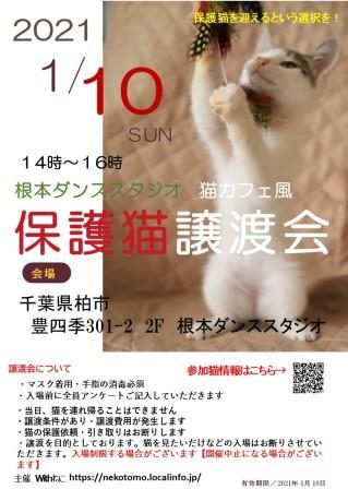 1/10(日)根本ダンススタジオ猫カフェ風保護猫譲渡会