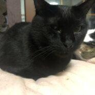 可愛い保護猫『黒ちゃん』