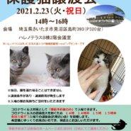 【完全予約制】2/23(祝)ハレノテラス保護猫譲渡会