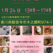 保護犬&保護猫の譲渡会